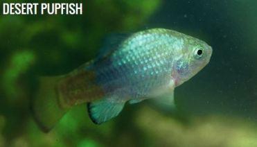 www.biologicaldiversity.org