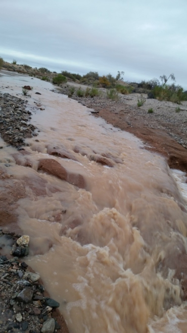 Rio Sonoyta flowing near Pinacate Biosphere Field Station. Photo: ASDM/Amy Orchard
