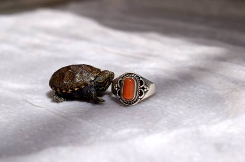 Ring for scale! Photo: ASDM/Kat Rumbley