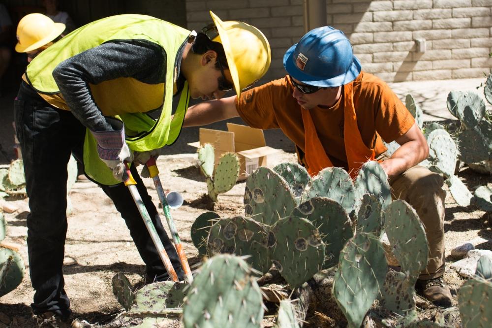 Friday_Planting cacti at Sabino Canyon Visitor Center_Photo by Michelle Dillon.jpg