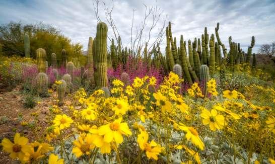 Cactus-Garden_Jay_Pierstorff
