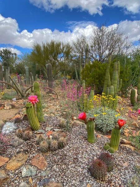 Cactus_Garden_Maria_Castano(2)