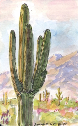saguaro_illustration